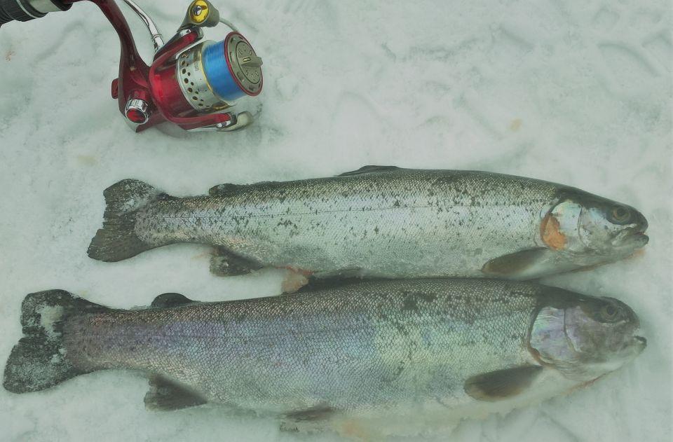 02.03.2018.Wczoraj wizyta w nowym sklepie Rabfishing i zakup nowych zanęt.Dzisiaj mimo ekstremalnych warunków ich test.Zdjęcia świadczą o ich skuteczności.