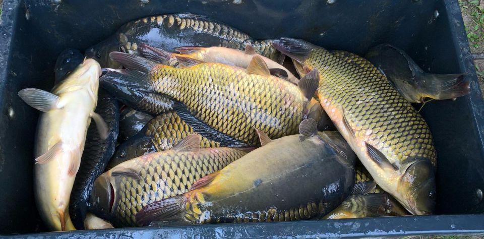 08.07.2017.Stawy SW LIN w Rudzie Śląskiej. Ryb u nas dostatek ale kolejne zarybianie by mogli połowić ci co się uczą.( 420 kg karpia i amura)