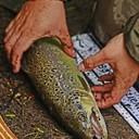 http://www.koda-fishing.pl/images/groupphotos/9/46/thumb_c9877432b40ca3f108e5c1ee.jpg