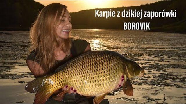 Karpie z dzikiej zaporówki - Borovik - NLT.SKLEP.PL