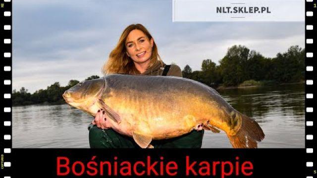 Bośniackie karpie - Pelagicevo - NLT.SKLEP.PL