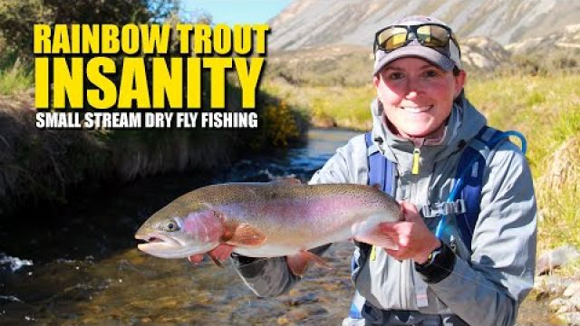 Rainbow Trout Insanity - Small Stream Dry Fly Fishing EPIC